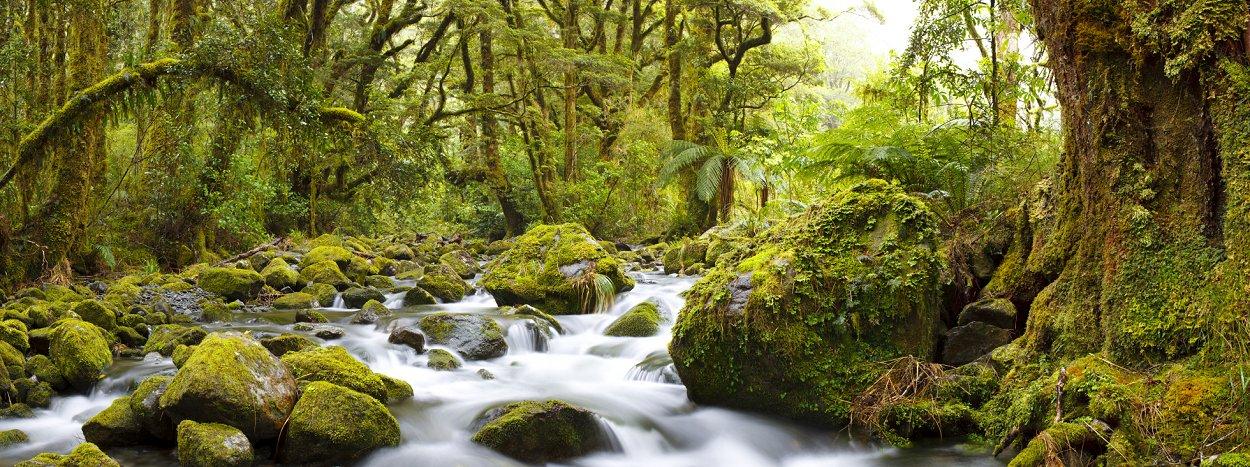 KIA ORA, WELCOME TO BEAUTIFUL NEW ZEALAND!