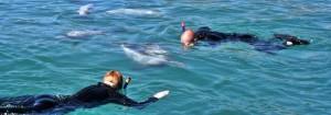 Akaroa Swim with Dolphins