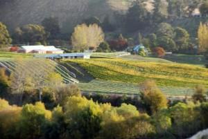 Bay Tours Estate Wine Tour