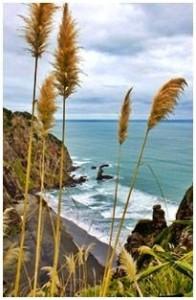 Coast and Rainforest Walk