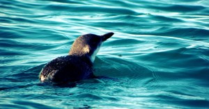 Penguin and Seal Tour