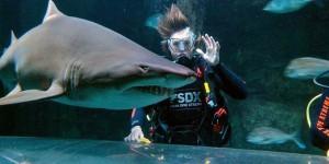 Shark Experiences, www.kellytarltons.co.nz