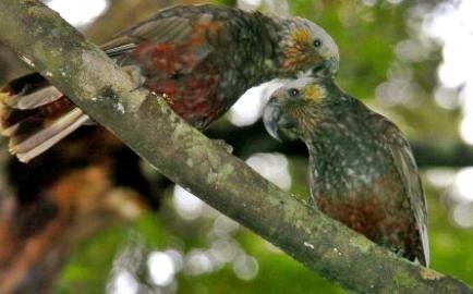 Ulva Island Birds & Forest Tour