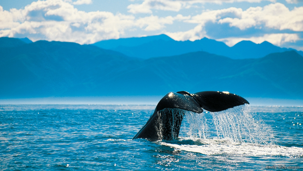 Kaikoura Day Tour inc Whale Watch, Photo Credit: Chris McLennan