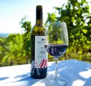 Wine on Waiheke