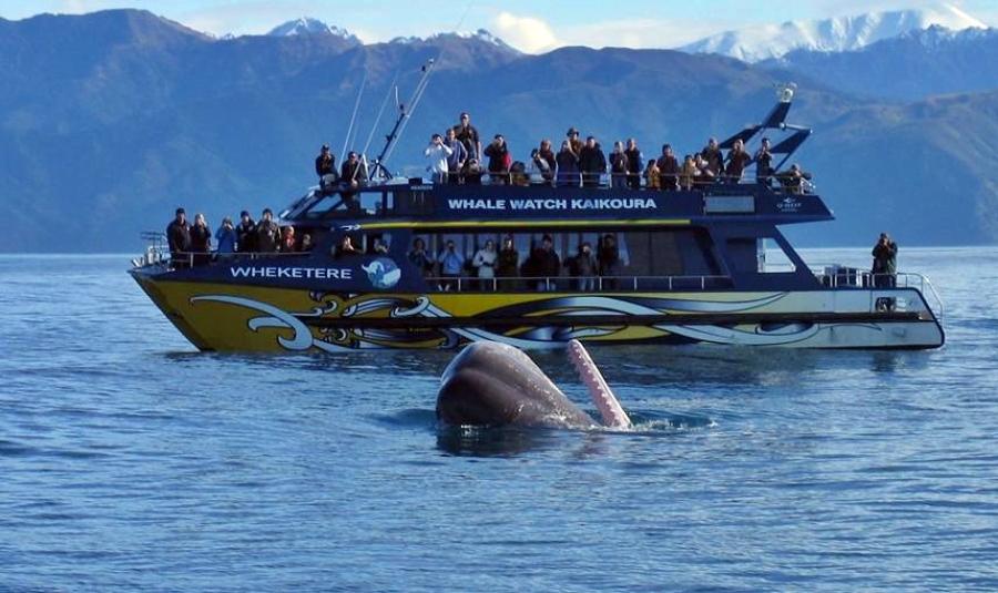 Kaikoura Day Tour inc Whale Watch